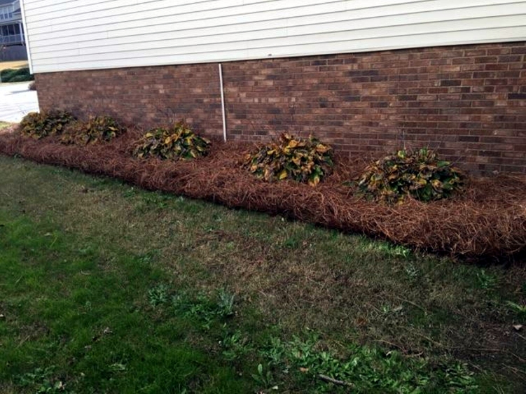 pine straw in Greenville flower bed